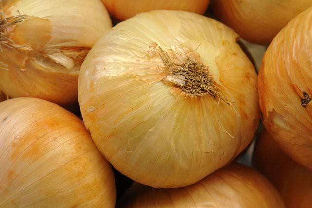 Epagri desenvolve Projeto de Produção Integrada de cebola