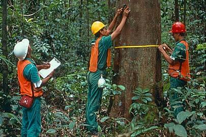 Julho é o mês que se comemora o Dia do Engenheiro Florestal