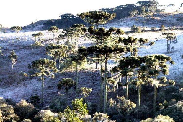 Santa Catarina registra geada e temperaturas negativas neste domingo