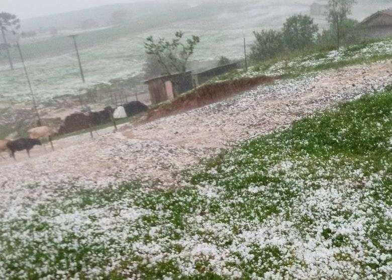 Agricultora relata prejuízos após chuva de granizo em Vidal Ramos
