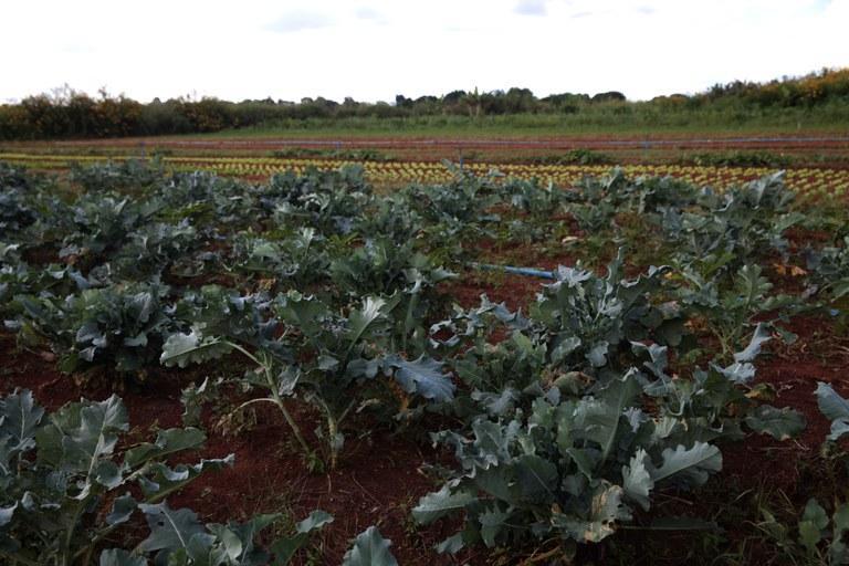 Agricultores da região têm Declarações de Aptidão ao Pronaf (DAP) suspensas