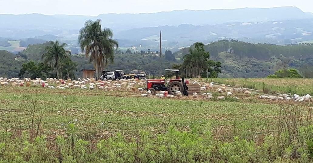 Anace emite nota de apoio aos agricultores em virtude da volta dos auditores do Ministério do Trabalho a Região da Cebola