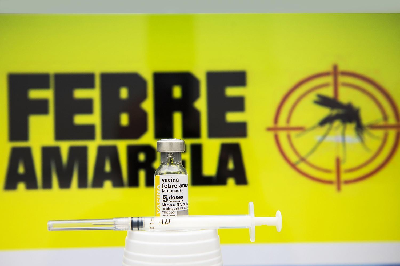 Análise de seis macacos encontrados mortos deram negativa para Febre Amarela