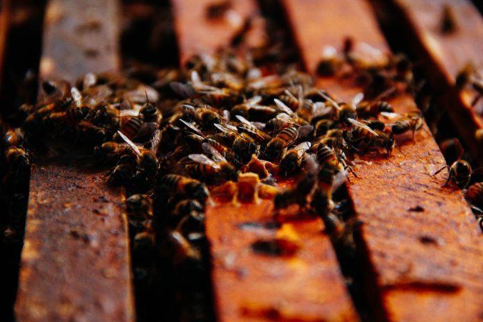 Bom Retiro está entre as cinco cidades que mais produz mel no Brasil