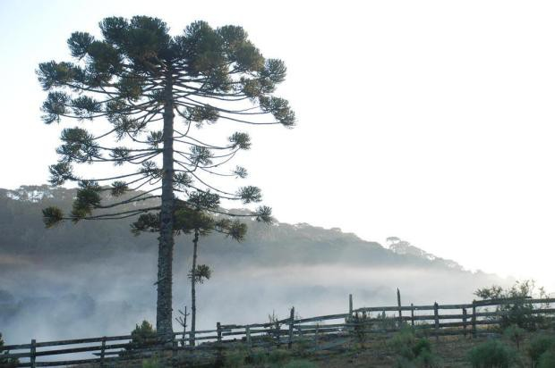 Amanhecer registra -3,7ºC em Urupema, na Serra catarinense