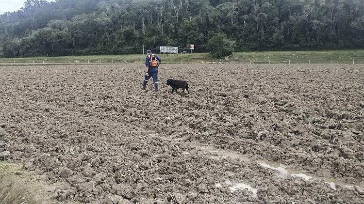 Cães ajudam em buscas de mulher desaparecida em Agronômica