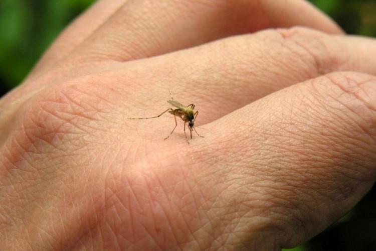 Casos suspeitos de dengue são descartados em Ituporanga