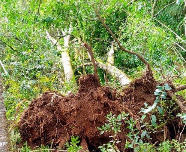 Consema aprova reaproveitamento das árvores derrubadas pelos tornados em Santa Catarina