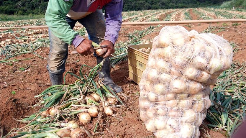 Deputado afirma que tributação de agrotóxicos aumentaria custo da produção de cebola na região