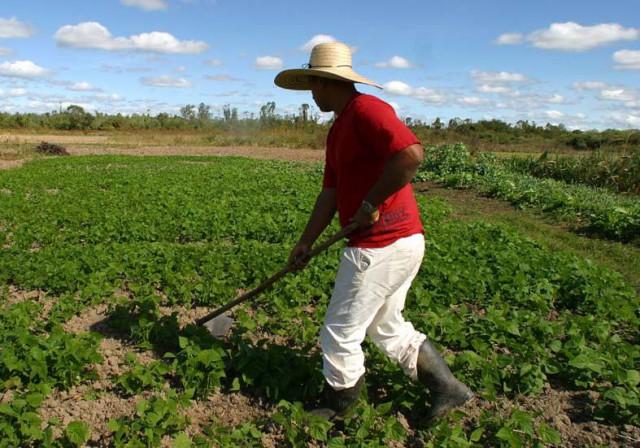 Campanha da Epagri incentiva agricultores sobre o uso do chapéu