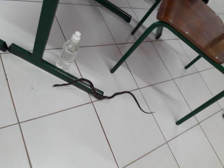 Em Xanxerê, cobra aparece em seção e interrompe votação