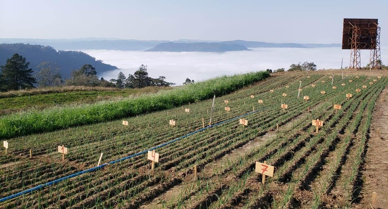 Empresa de Ituporanga, ACEI e IFC de Rio do Sul firmam parceria para pesquisas no cultivo da cebola