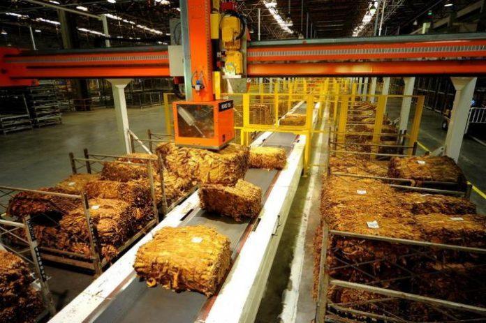 Empresas fumageiras retomam compra do tabaco em meio à crise do coronavírus