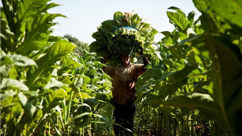 Encontro nessa manhã em Ituporanga tratou sobre a lei de integração para produtores de fumo