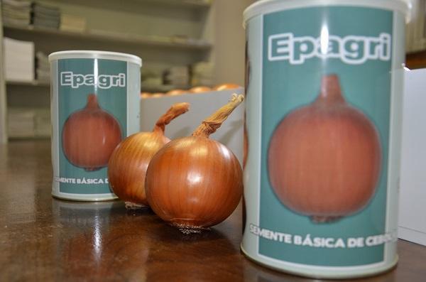 Epagri de Ituporanga apresenta novas variedades de sementes de cebola