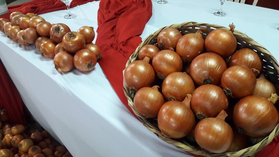 Epagri de Ituporanga celebra sucesso das variedades de cebola Vale Sul e Poranga