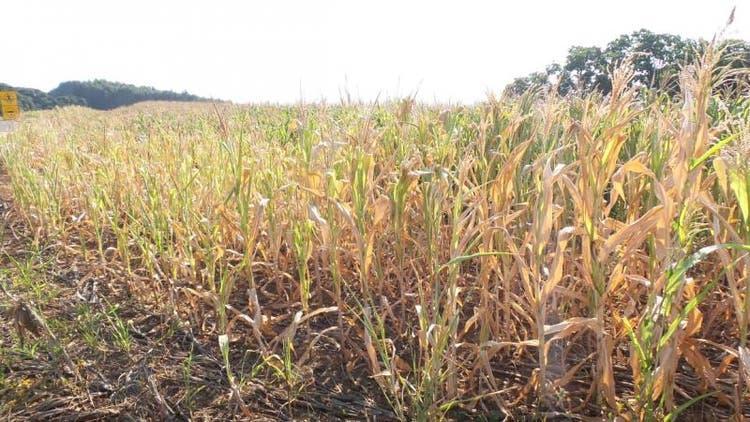 Estiagem: SC anuncia crédito e prorrogação de pagamentos para produtores rurais