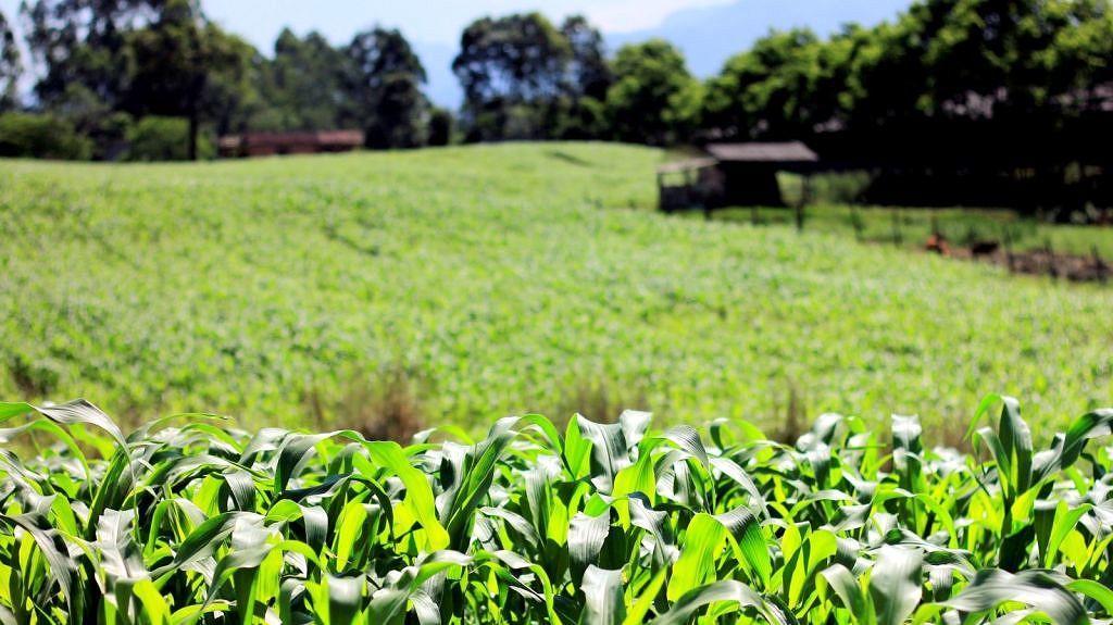 Fetaesc diz que juros do novo Plano Safra não auxiliam a subsidiar a agricultura familiar