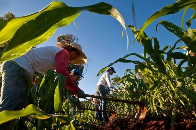 Fetraf-Sul lamenta que Governo Federal tenha vetado auxílio emergencial para agricultores familiares