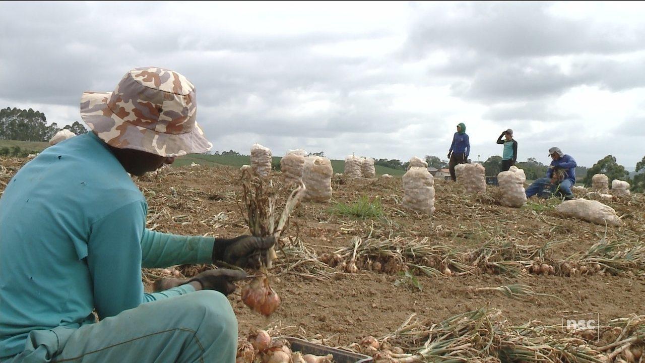 Fiscalização: Advogado rebate acusação de escravidão em propriedades rurais no interior de Ituporanga