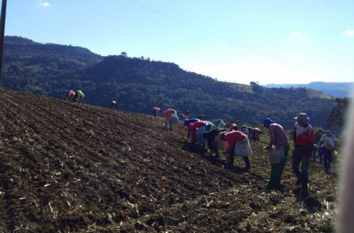 Frio e seca atrasam plantio e reduzem área de cebola na Serra catarinense