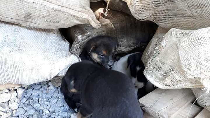 Gari de Imbuia recolhe mais de 10 animais abandonados em lixeiras da cidade