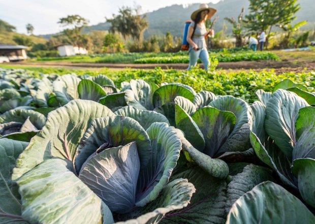 Governo do Estado investe na compra de produtos da agricultura familiar