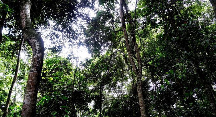 Morte de macaco por febre amarela em Ibirama acende alerta para circulação da doença no Alto Vale