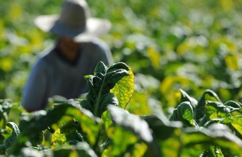 Negociação do preço do tabaco inicia nesta quarta-feira