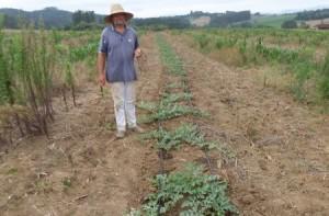 Agricultor de Aurora melhora produção de melancia com sistema de irrigação