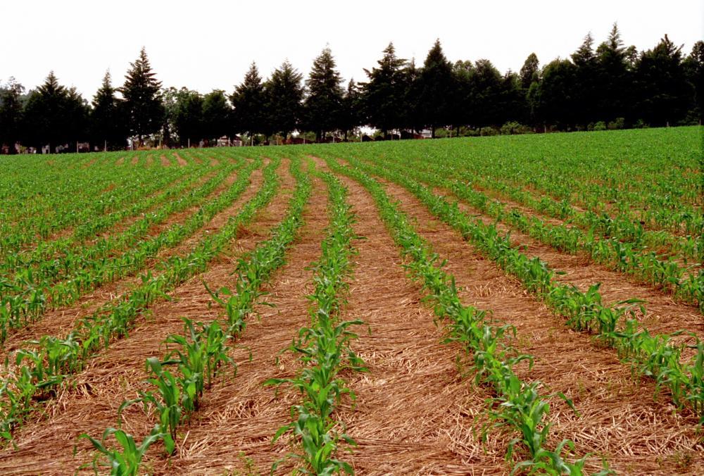 Agricultores da Região da Cebola apostam na diversificação de culturas nas propriedades