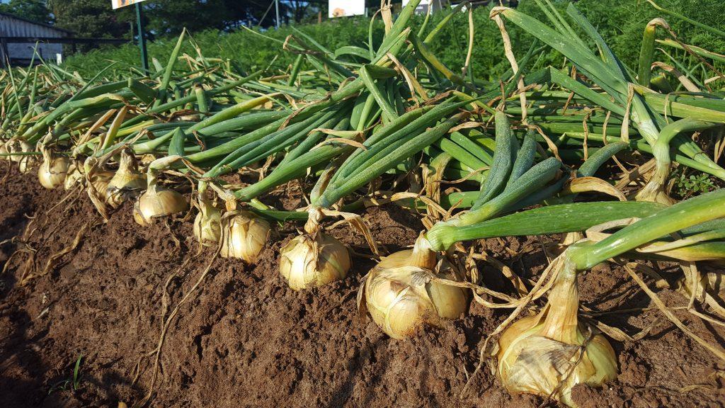 Agricultores devem ficar atentos as regras para não perder a cobertura do Proagro