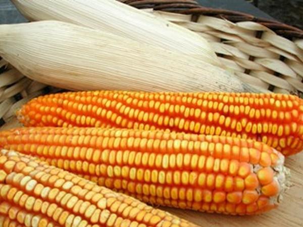 Agricultores podem solicitar sementes do Programa Terra Boa, em Petrolândia