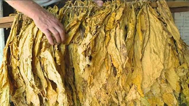 Após rodada de negociação, reajuste no preço do tabaco segue indefinido