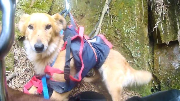 Bombeiros de Ituporanga resgatam cadela quatro dias após queda de penhasco em SC