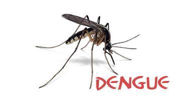 Campanhas de combate a dengue são lançadas em Imbuia