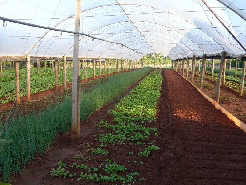 Cultivo protegido pode ser alternativa para garantir e aumentar a produtividade de hortaliças na Região da Cebola