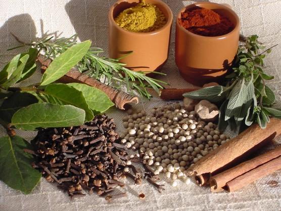 Curso sobre plantas medicinais será realizado no Alto Vale