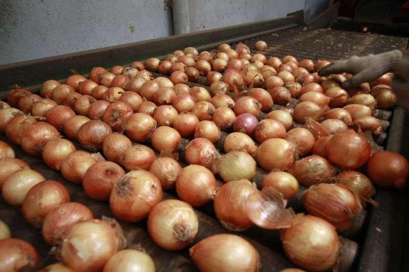 Dados apontam que importação de cebola diminuiu em 2018