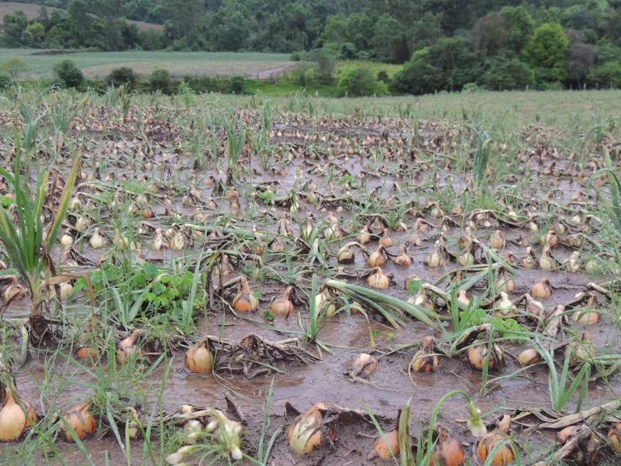 Fortes chuvas deixam R$ 94 milhões de prejuízos em Ituporanga
