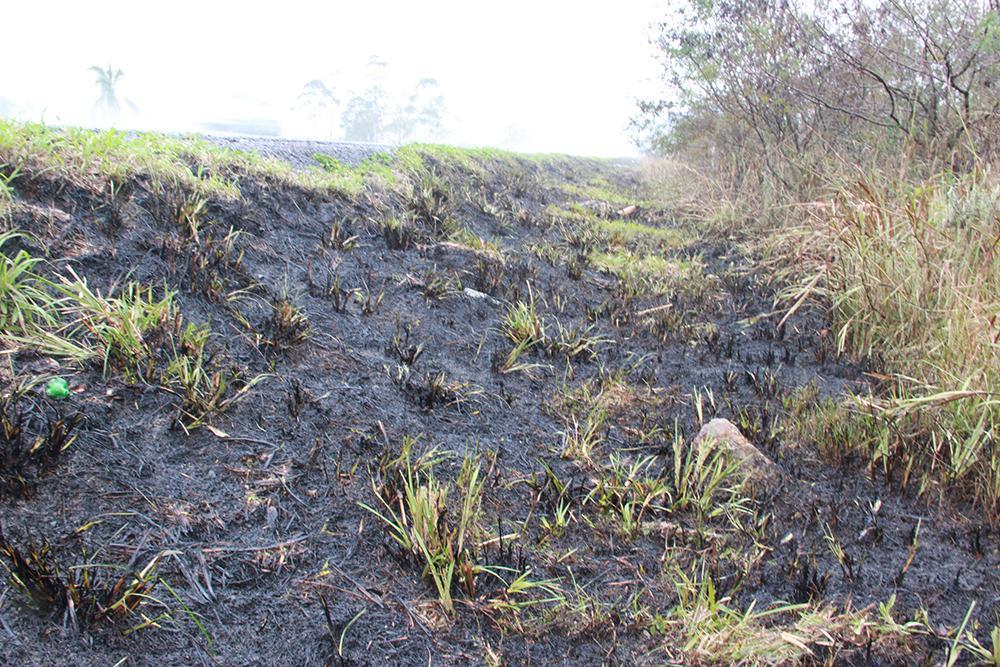 Incidência de queimadas chama atenção na região da Cebola