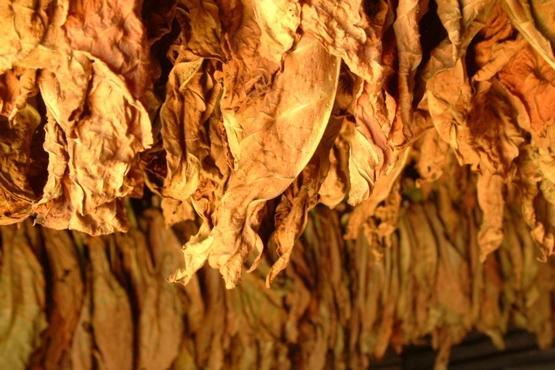 Liminar garante cessão de gerador de energia a fumicultores da comarca de Ituporanga