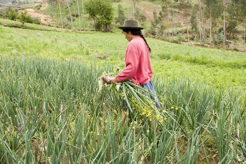 Mulheres agricultoras se reúnem nesta quinta-feira em Ituporanga