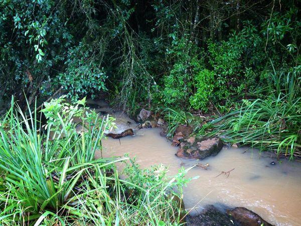 Mutirão de combate ao borrachudo será realizado em Ituporanga