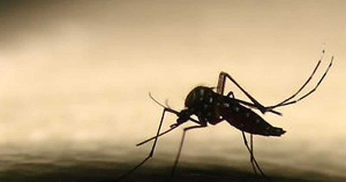 Pelo menos 25 focos de Dengue foram encontrados no Alto Vale em 2017