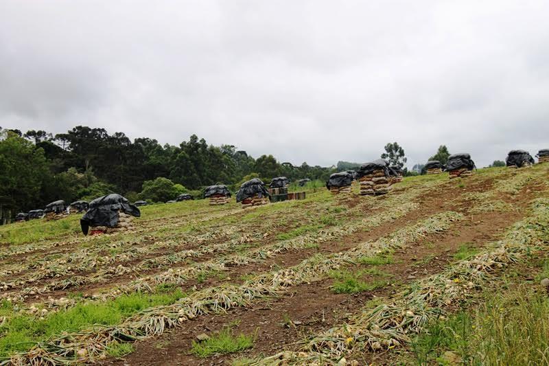 Petrolândia contabiliza R$ 25 milhões em prejuízos para a agricultura
