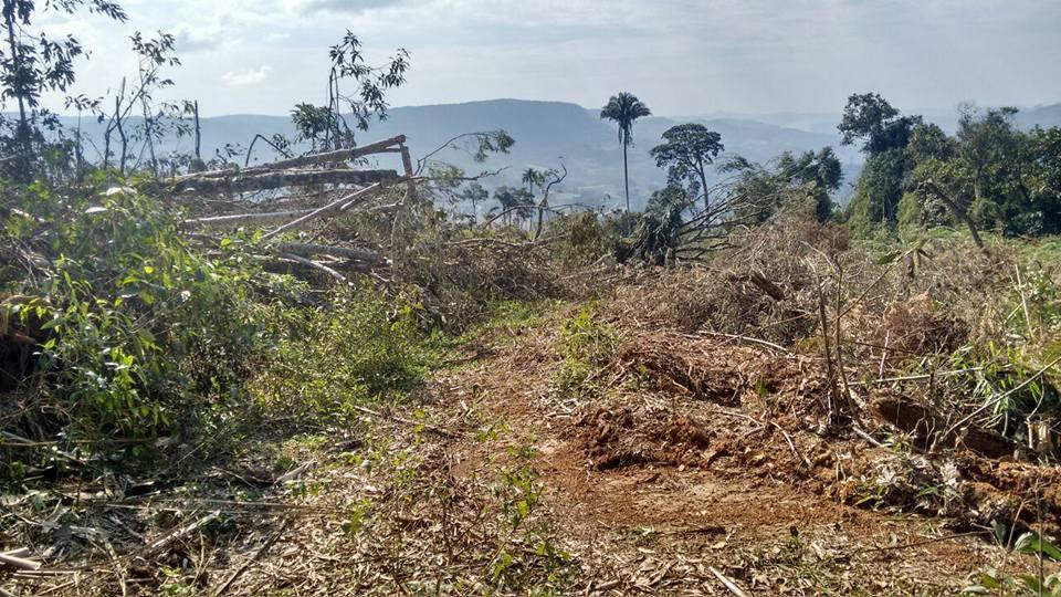 Polícia Ambiental flagra desmatamento de vegetação nativa em Vidal Ramos