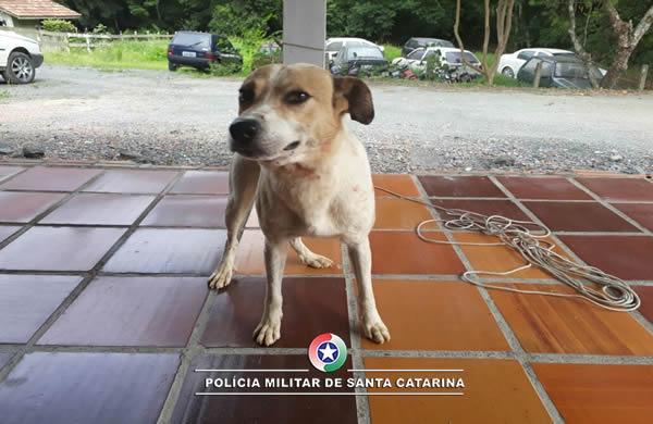 Polícia Militar de Atalanta atende ocorrência envolvendo abandono de animal