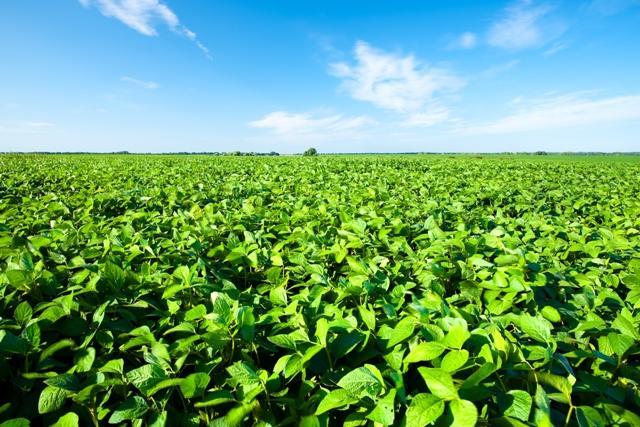 Produtores de cebola trocam a hortaliça pelo cultivo de grãos na região