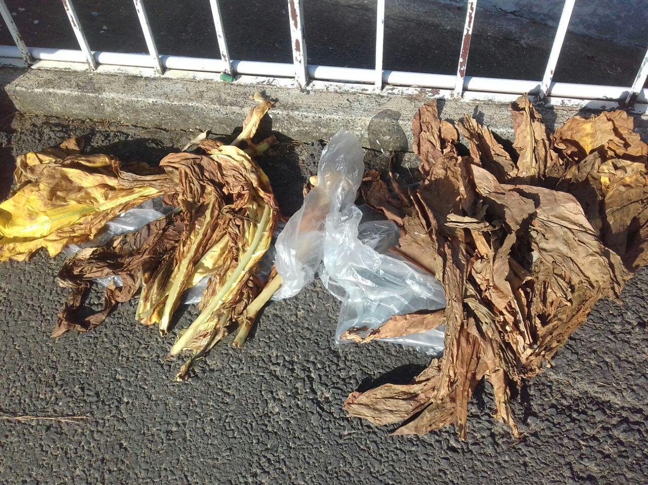 Produtores de fumo podem pedir indenização por perdas causadas por falta de energia